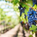 assisium-wine-tour-vino-cantine